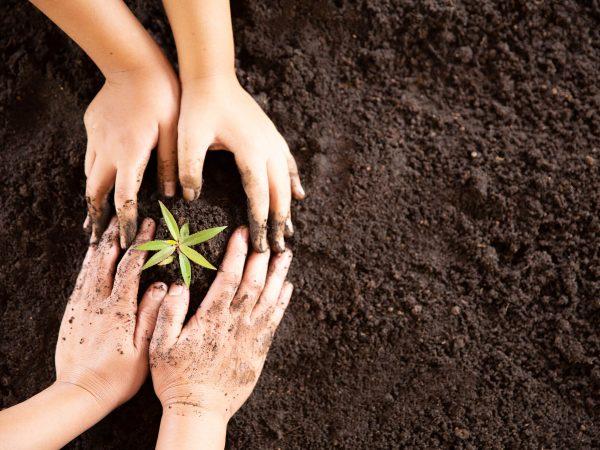 Focus sulla CSR