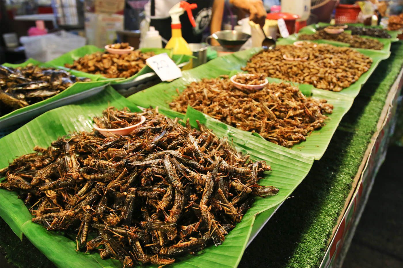 Insects, 4 italians out of 10 are ready to eat them