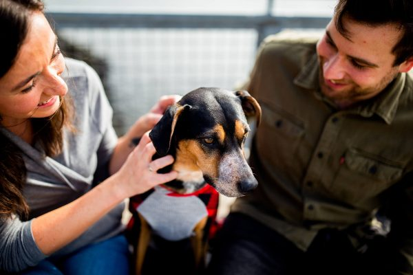 Voglia di compagnia e affetto, ma anche smartworking e più tempo a disposizione: le adozioni di animali domestici nell'ultimo anno